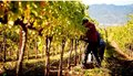 rodney-strong-vineyards-02_970_528_60_s_c1_2