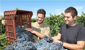 Πληθωρικά κρασιά υπόσχεται η φετινή συγκομιδή