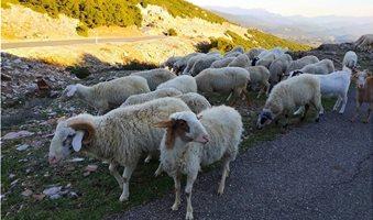 προβατα-εα-2_2