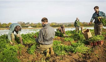 120717-migrant-workers-picking-vegetables-c-Mint-Images-REX-Shutterstock-rexfeatures_8515973a