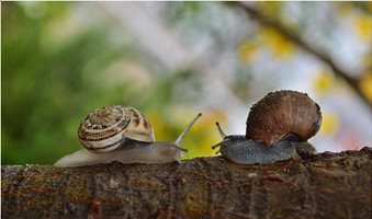 2-snail-facing-each-other-183333-scaled