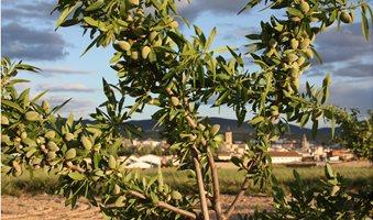207107-1920x1280-Almond-tree