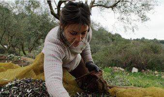 636572506117150495-XXX-JM-Greek-farmers0282