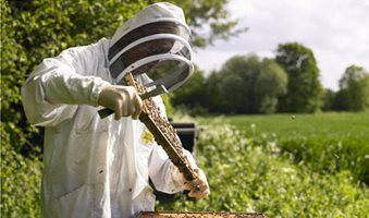 Bee-keeper-collecting-hon-001