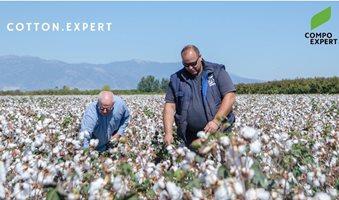 Cotton_expert