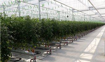 Greenhouse-Geopal