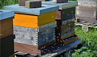 How-to-start-a-beehive