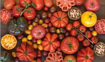 NFF_Tomatoes_Mix-2-W