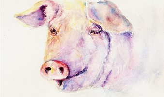 Pig122714-1024x820