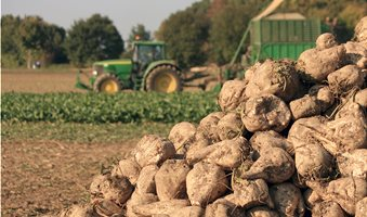 Sugar-beets-agriculture---PULP2VALUE--AdobeStock_40515332