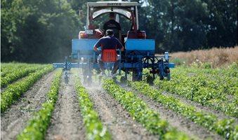 Farmer_spread_organic_manure_on_a_pepper_field_in_Batya