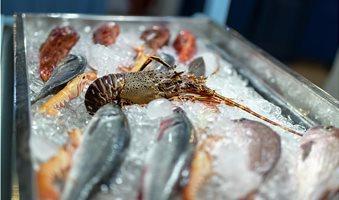 fresh-and-raw-seefood-on-ice-for-sale-krasimir-kanchev