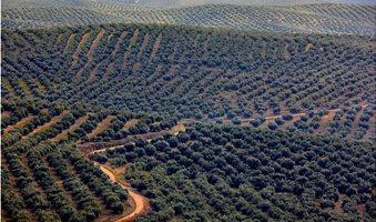 olive-sea
