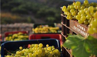 harvest_moschato_spinas