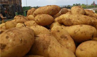 kalliergeia-patatas