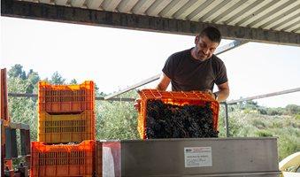 oinopoieio-vakakis-wines-samos