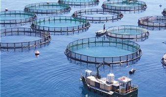 aquaculture-net-500x500
