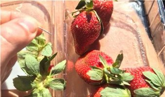 australia_strawberries-JOSHUA_GANE_BBC