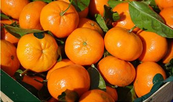 clementines-318210_960_720-1024x682
