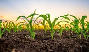 corn_1280p