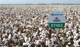 cottoncorteva