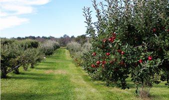 cubert-gmbh-apple-trees-quantification-of-crop-load-__1_