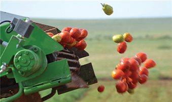 Στη βιομηχανική ντομάτα βοηθάει μόνο η βιομηχανία