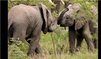 Σε κίνδυνο 80.000 φυτά - ζώα από την κλιματική αλλαγή