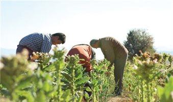 Αγάπες με τους αγρότες ξανάρχισε το καπνεμπόριο