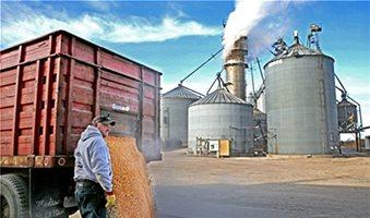 Ενισχύεται η ζήτηση λόγω εξαγωγής για το σκληρό σιτάρι