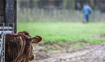 Σε ημετέρους οι πόροι της Βιολογικής κτηνοτροφίας