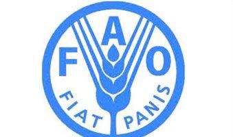 «Ιστορική» παραγωγή σιταριού βλέπει ο FAO