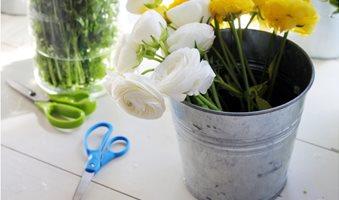 nature-blossom-plant-leaf-flower-petal-1074254-pxhere_com
