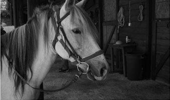 nymfes-horsie