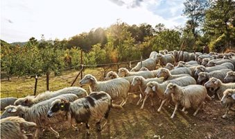 pecore-725x512