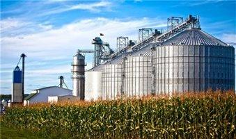 Ένζυμα αρχαίων εντόμων ενισχύουν την παραγωγή βιοκαυσίμων