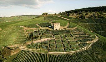 stettener-monchberg-vineyards-wurttemberg-germany