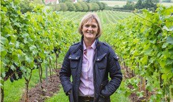sustainible-wines