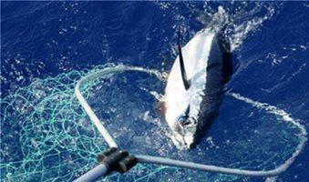 Λιγοστεύουν τα ψάρια της Μεσογείου