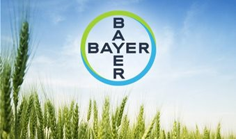 bayer_wheat