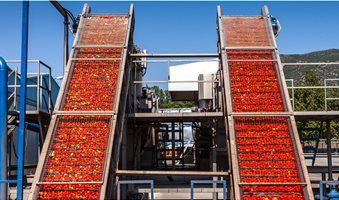 tomato_processing_factory_IMG_7631_1200