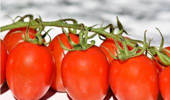 tomatoes-3480643_1920