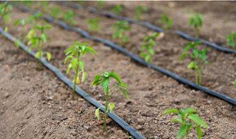 top-four-irrigation-techniques-782x440