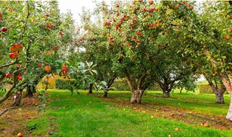 weeds_control_in_orchard-1500x750