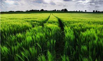 ws_Vibrant_Green_Wheat_Field_Path_1920x1200__1_
