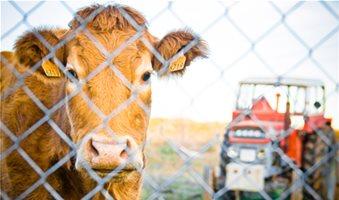 Ηλεκτρονικά από 19 Μαρτίου αιτήσεις στη Βιολογική Κτηνοτροφία