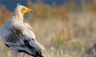 Πέντε ελληνικές υποψηφιότητες για τα Βραβεία Natura 2000