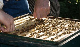 Κανόνες ορθής μελισσοκομικής πρακτικής