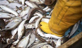 Τα ψάρια εξαφανίζονται με πολύ ταχύτερο ρυθμό λέει ο FAO