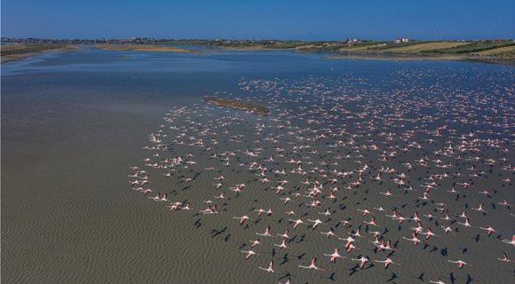 1642382_flamingo-xalkidiki_-5-